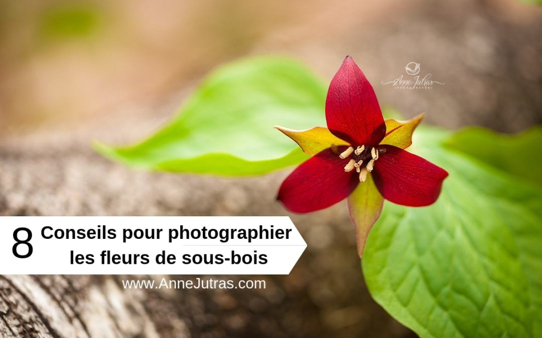 8 Conseils pour photographier les fleurs de sous-bois