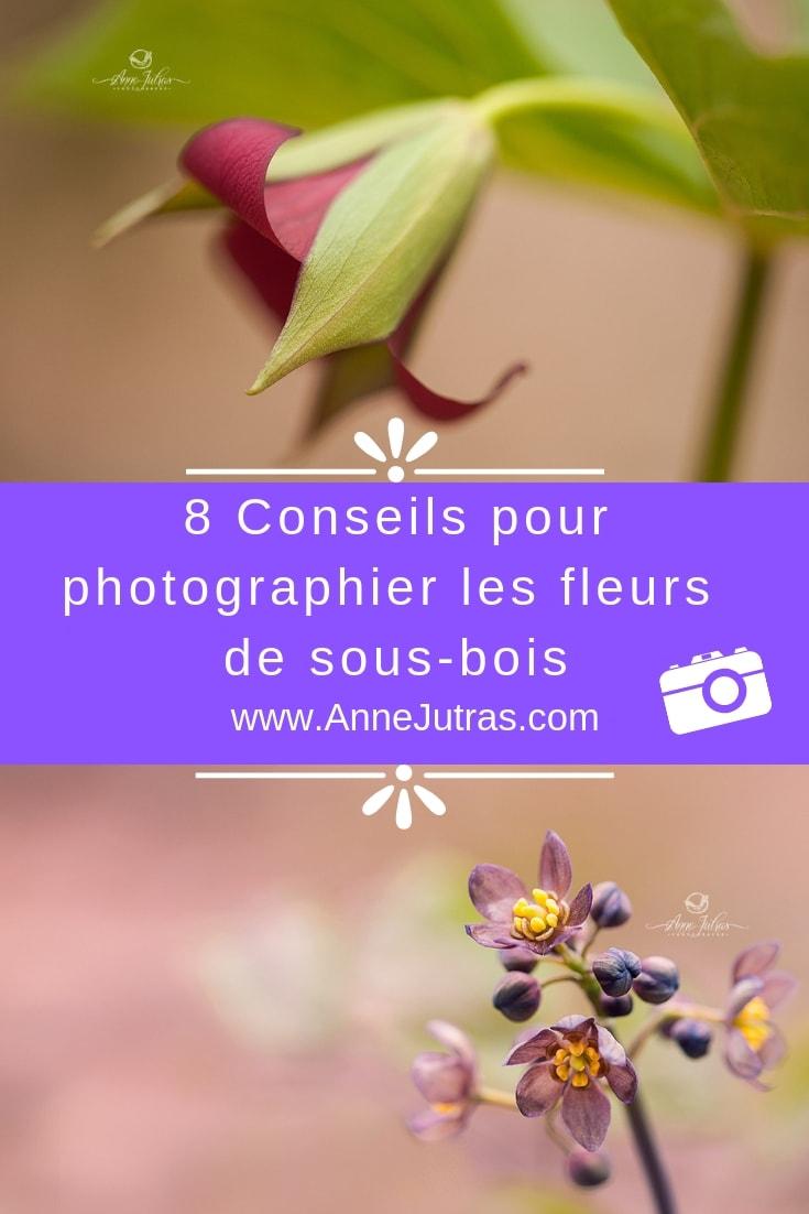7 Conseils pour photographier les fleurs de sous-bois