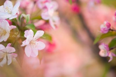 5 raisons de photographier - Exerce votre patience les fleurs _