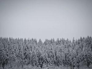 15km door Winterwonderland langs skipiste van Ovifat 2