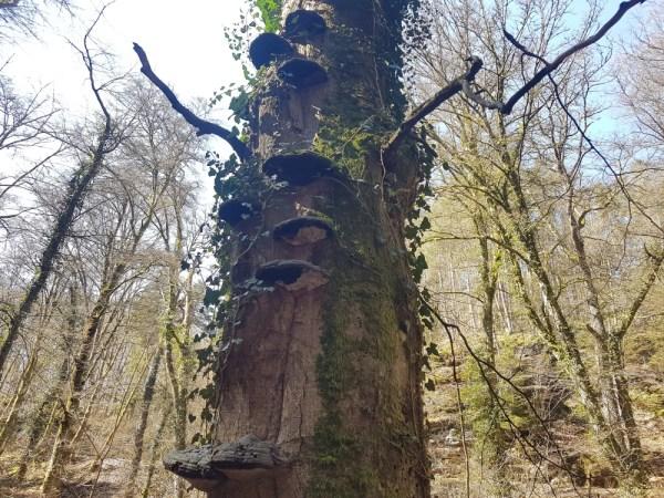 boom met zwammen