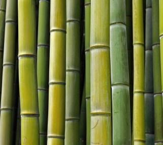 Bamboe 3