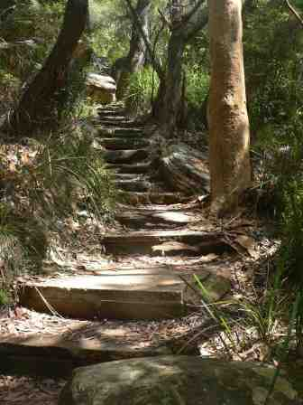 A pathway created by the dutiful worker bees of the Sydney Bushwalkers Club
