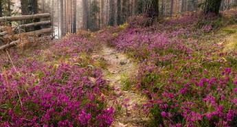 How Do I Forgive - Purple Flowers - Anne Partain