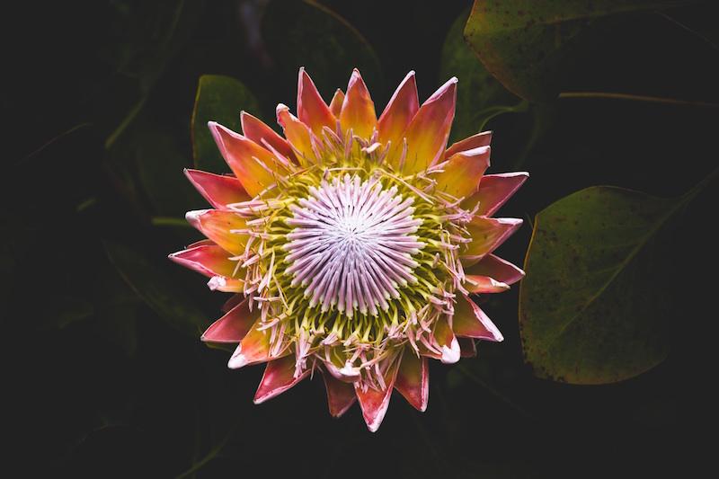 le-carnet-danne-so-Flower