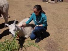 """""""Annee, ich will ein Lama!!"""""""