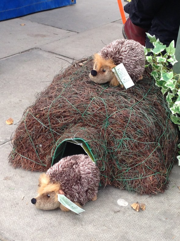 At the Edinburgh Farmers Market, a booth encouraged people to set up hedgehog habitats.  Apparently there is a significant hedgehog population that needs places to live.