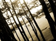 Drama of the trees
