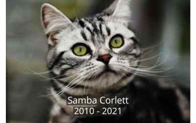 A Tribute to Samba