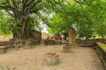 ワットマハタットにて。木々の複雑さが時の流れを感じさせる。