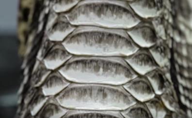 ワニ皮の表面