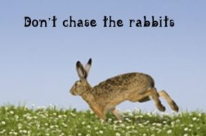 dont-chase-the-rabbits