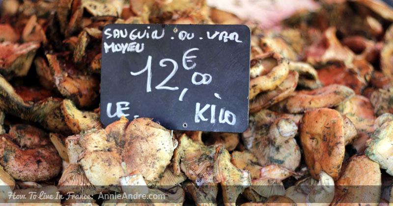 champignon_sanguin-2