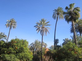 Palm & orange trees in Alcazar Seville