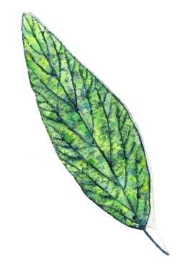green leaf jan 2017
