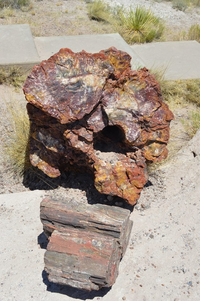 Annie Explore - Petrified National Forest