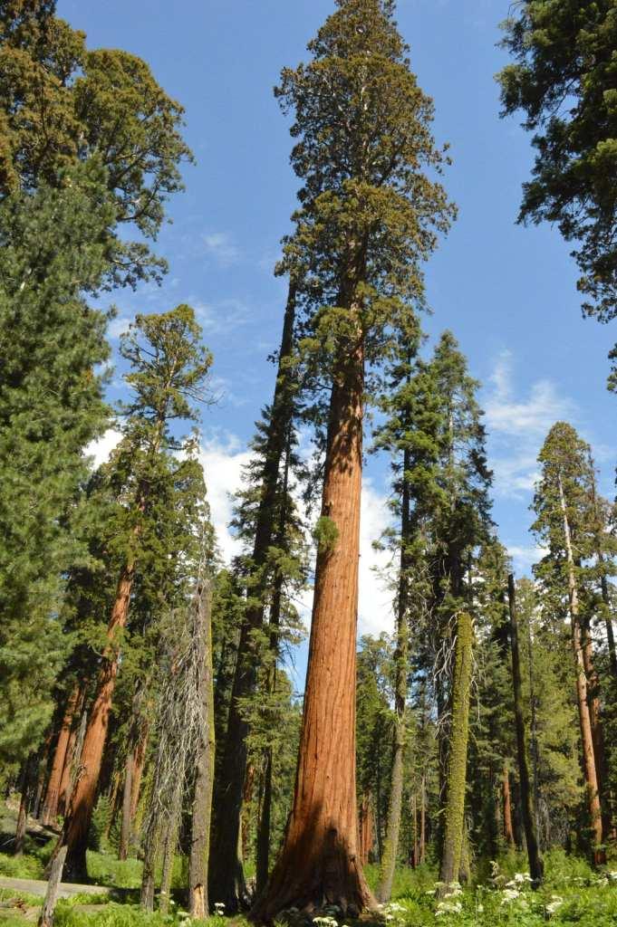 Annie Explore - Sequoia