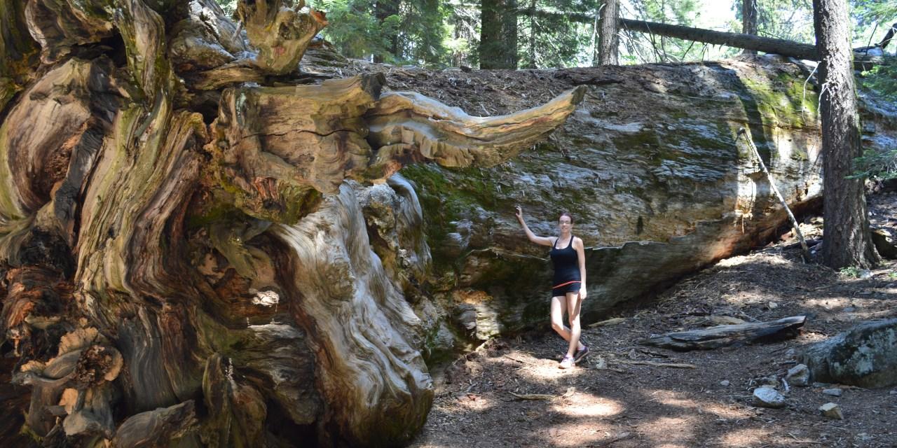 Sequoia National Park : des arbres plus grands que nature!