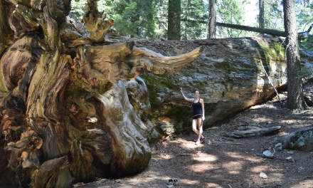 Sequoia National Park : des arbres plus grands que nature!
