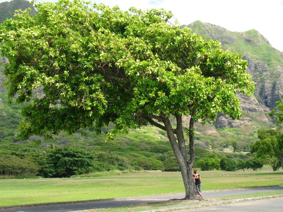 Annie Explore - Oahu