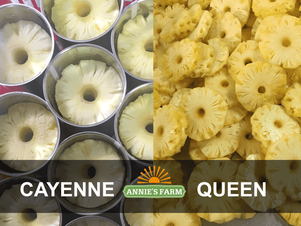 cayenne-queen-difference-annie's-farm