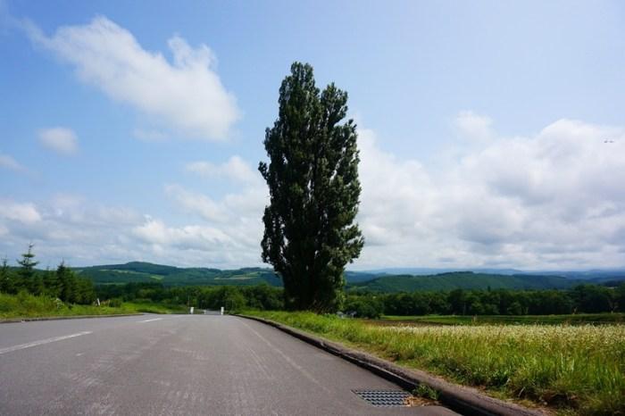 [夏 北海道] 美瑛 拼布之路 パッチワークの路