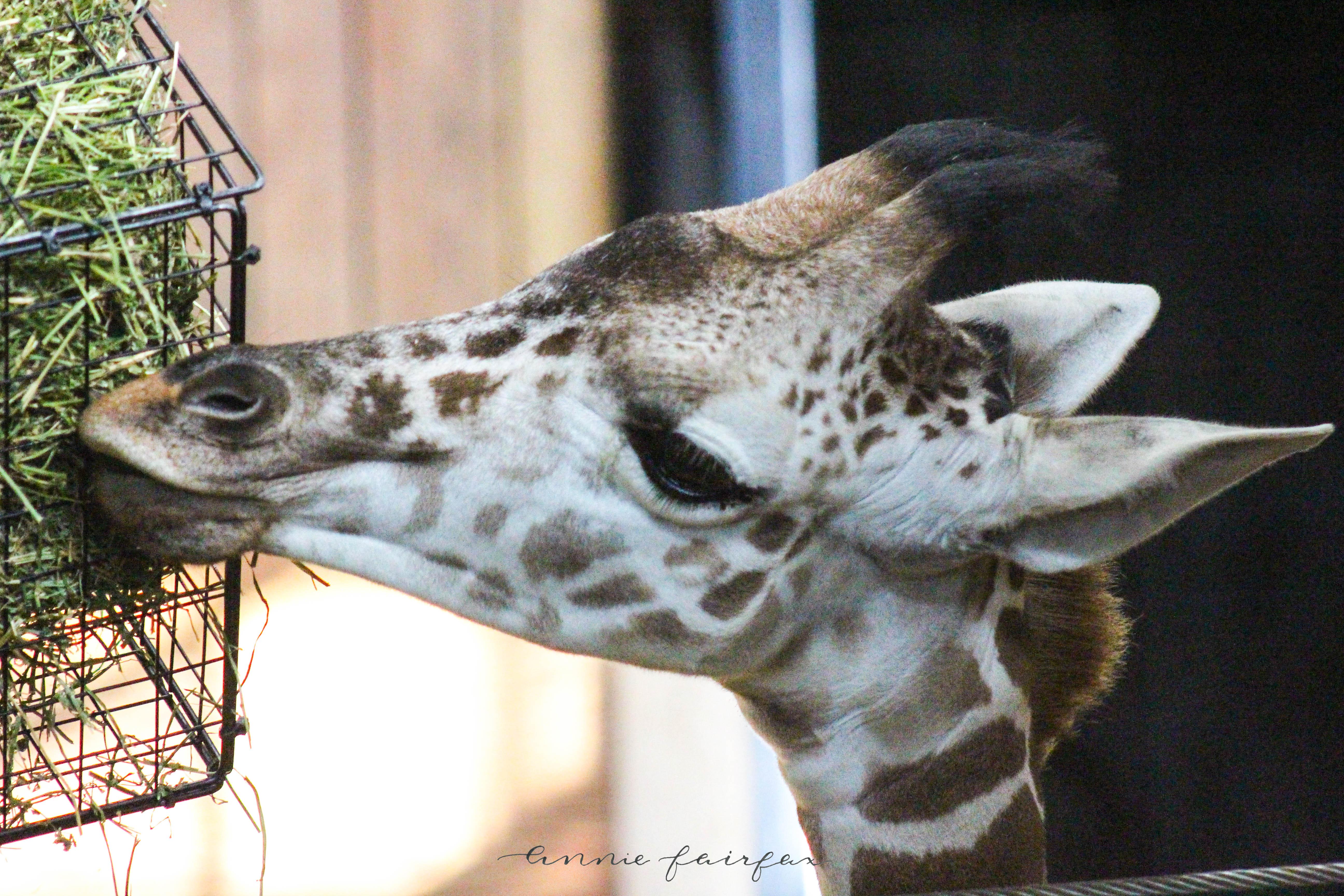 Giraffe via anniewearsit.com
