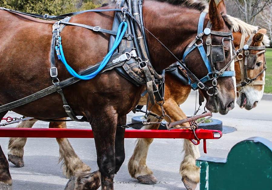 Horse Drawn Carriage by Annie Fairfax