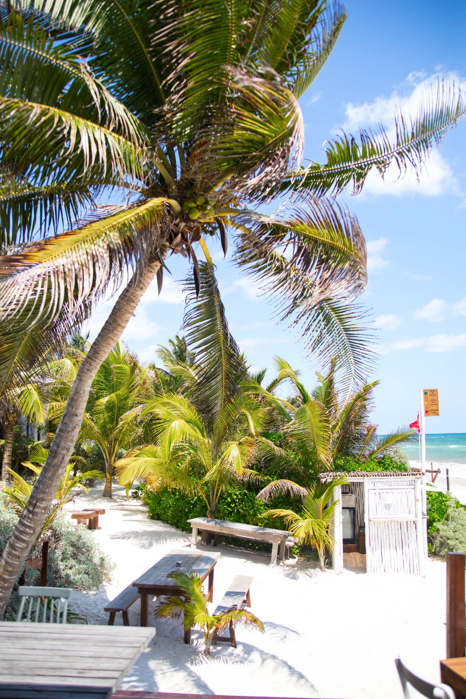 The Real Coconut Tulum at Sanará Resort Luxury Restaurants of the World