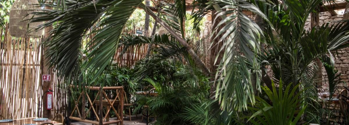 Luxury Restaurants of the World: Rosa Negra Tulum