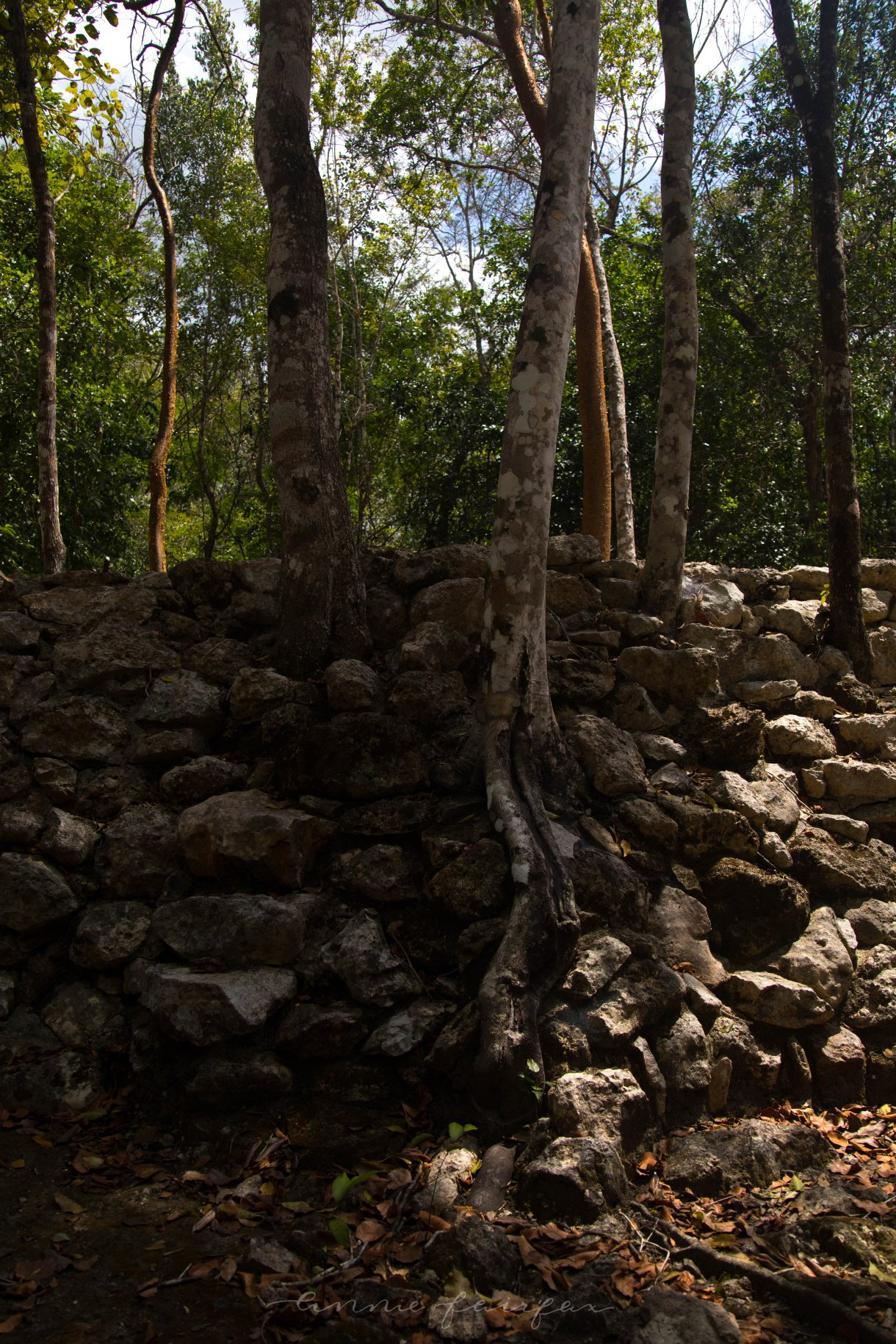 Exploring the Ancient Mayan Ruins of Cobá in Quinatana Roo, Mexico (Yucatán Peninsula)