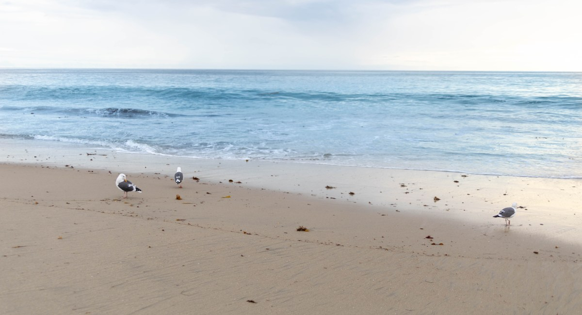Laguna Beach: The Luxury Travel Guide