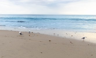 Laguna Beach: The Complete Traveler's Guide