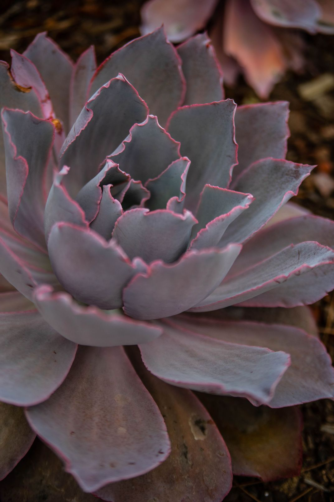 Los Angeles: The Complete Traveler's Guide by Annie Fairfax Succulents