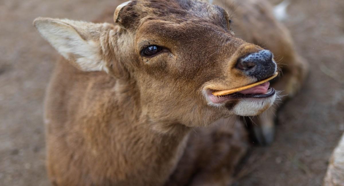Nara, Japan: The Luxury Travel Guide to Deer Park