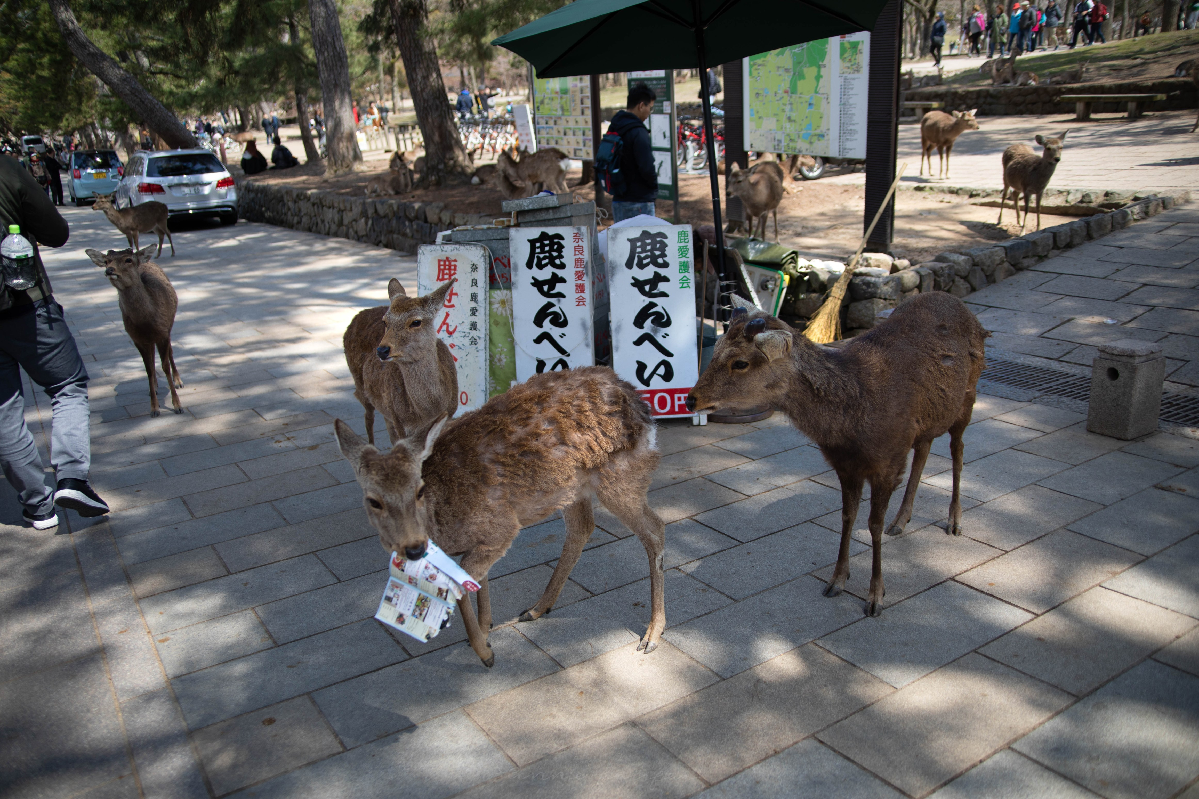 Nara: The Ultimate Travel Guide Written, Researched and Photographed by Annie Fairfax Nara Sacred Deer Park