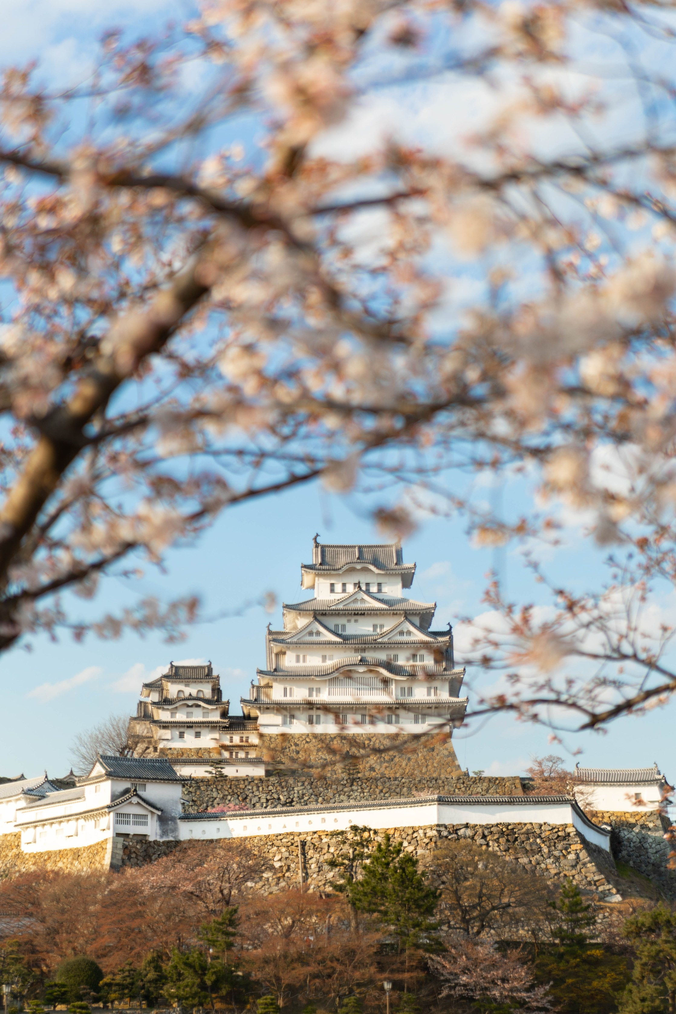 Cherry Blossoms Over Himeji Castle in Himeji, Japan by Annie Fairfax
