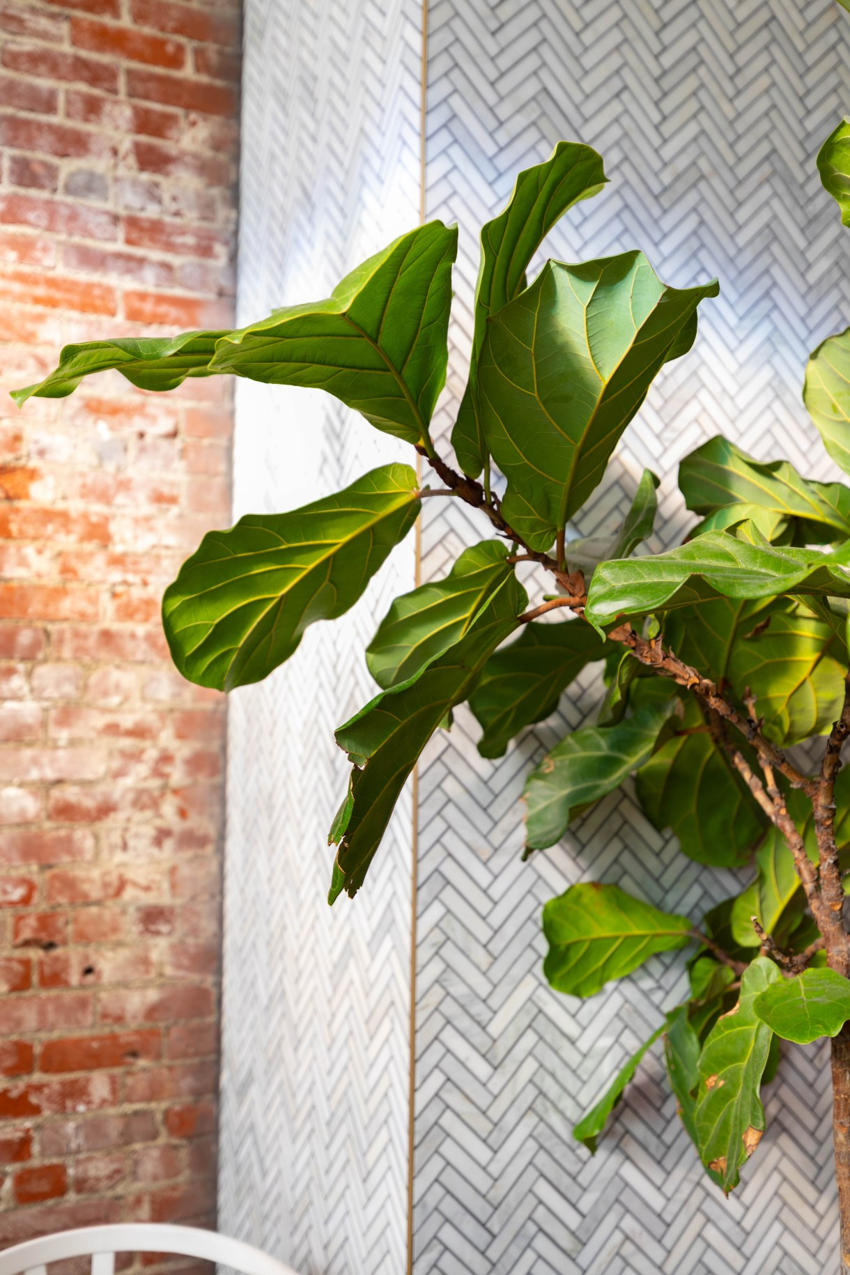 Fiddle Leaf Fig Garden Table Farm-Table Transparent Plant Based Dining in Indianapolis Luxury Restaurants of the World
