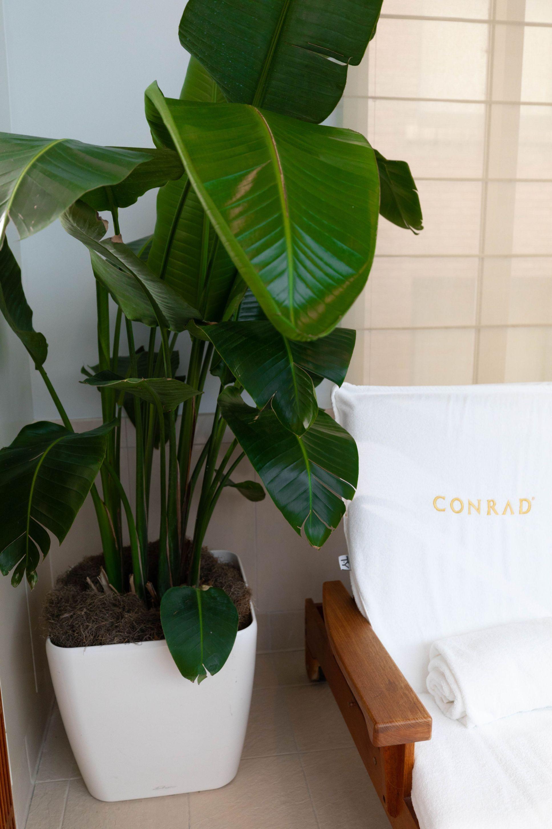Luxury Hotels of the World: Conrad Indianapolis
