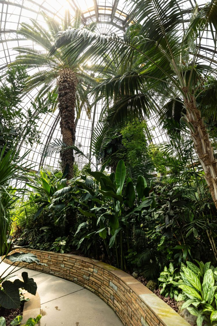 A Visit to Detroit's Anna Scripps Whitcomb Conservatory & Botanical Garden