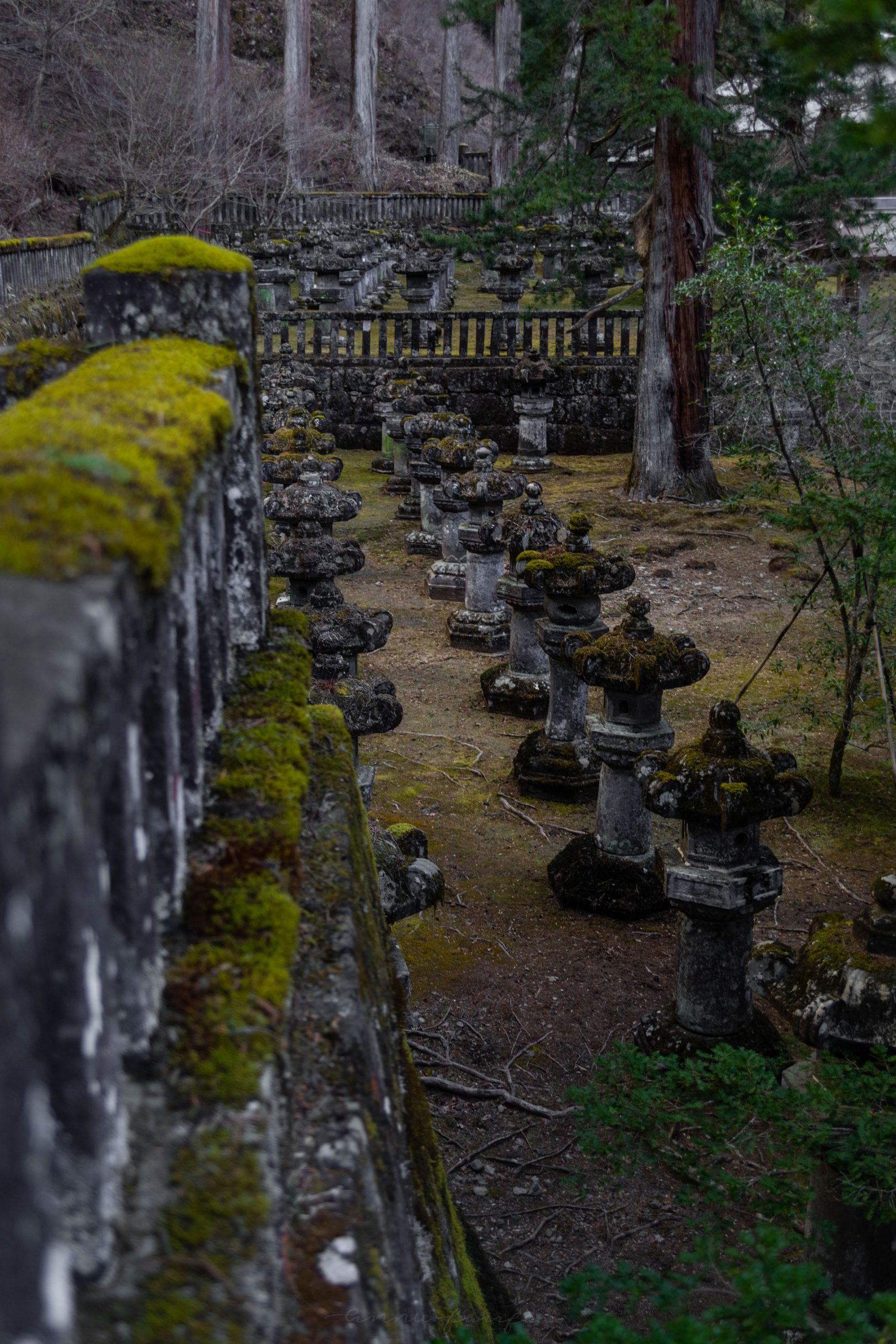 Stone Lanterns at Shinto Shrines