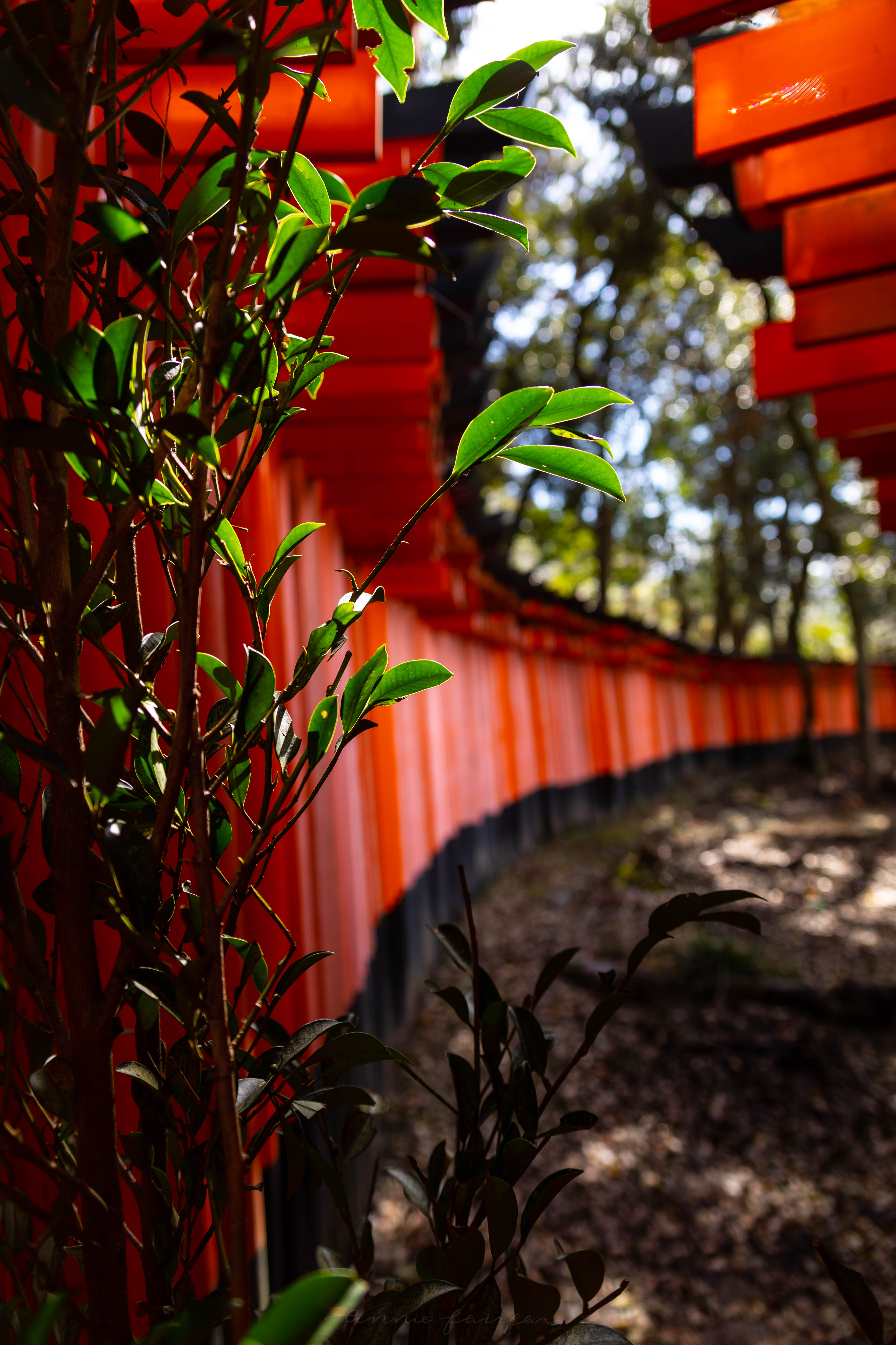 Outside of Lines of Torii Gates at Chozuya Waterr Ablution Purification at Fushimi Inari Taisha Shrine 10,000 Red Vermillion Torii Gates in Kyoto Japan Mt. Inari Hiking Path