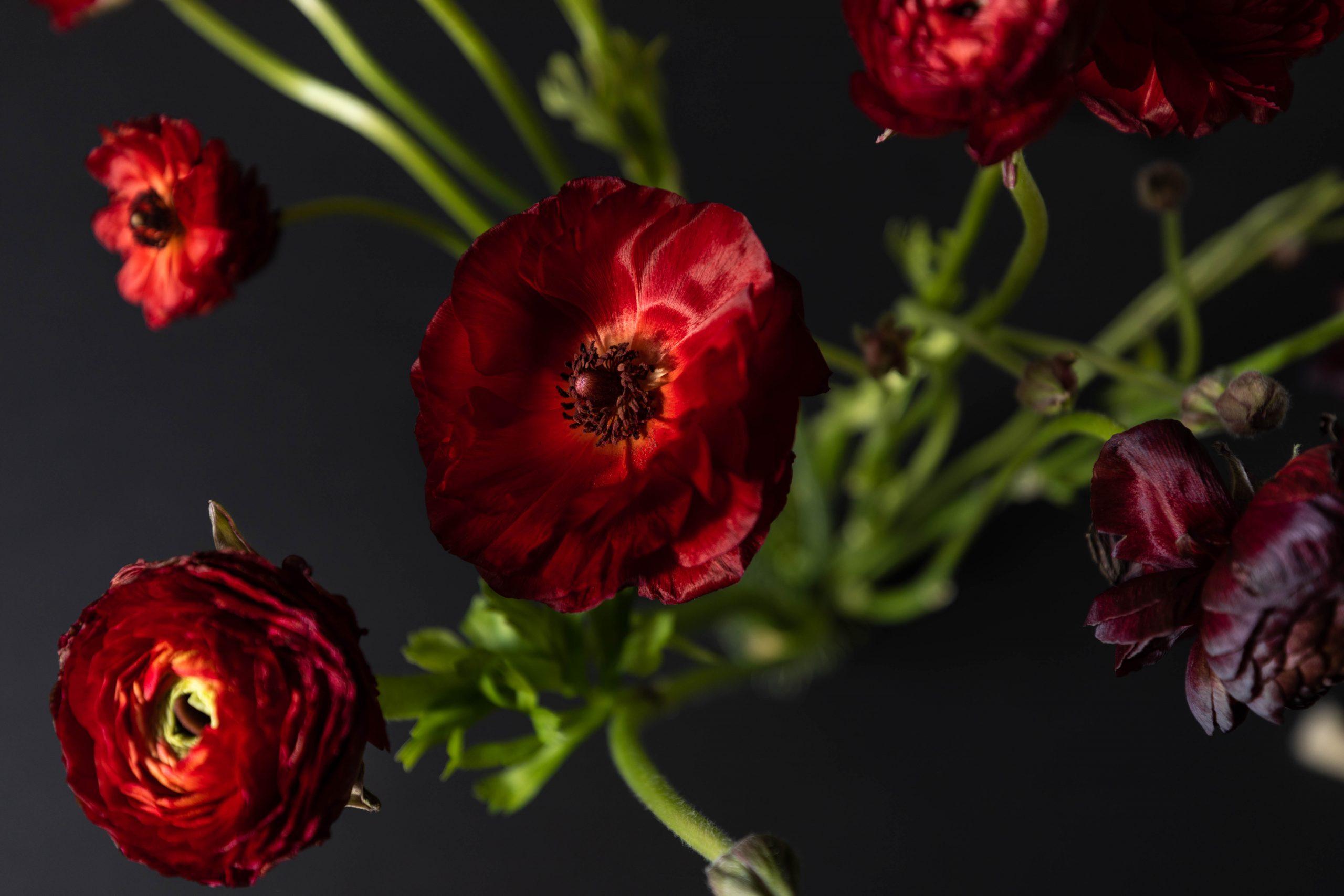 Terrain's 80 Stem Ranunculus Bundle Cut Flowers Mother's Day Graduation Bridal Shower Bouquet Fresh Flowers Online Luxury Bouquet