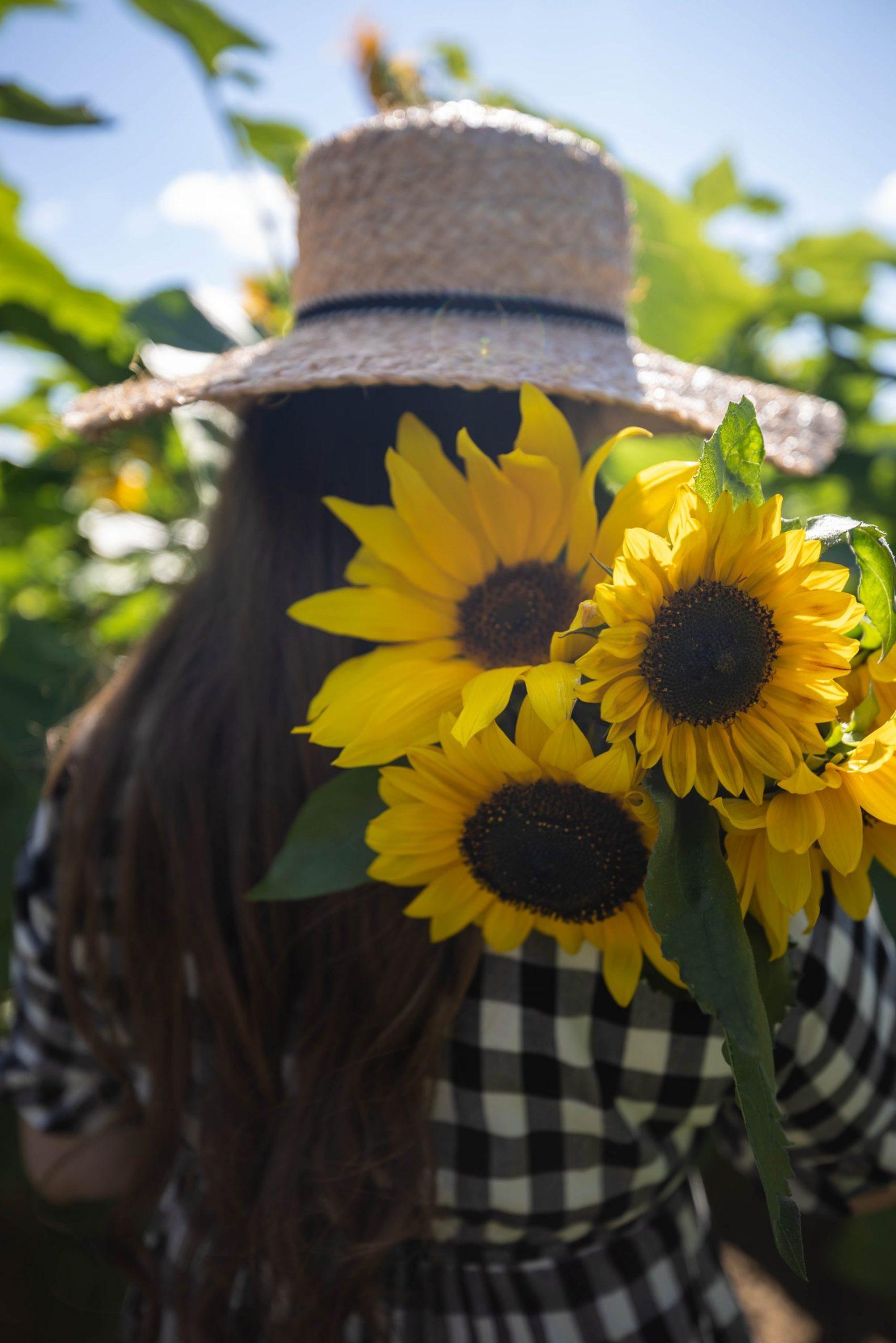 Sunflower Fields at DeBucks Sunflower U-Pick Farm in Belleville, Michigan Photographed by Annie Fairfax
