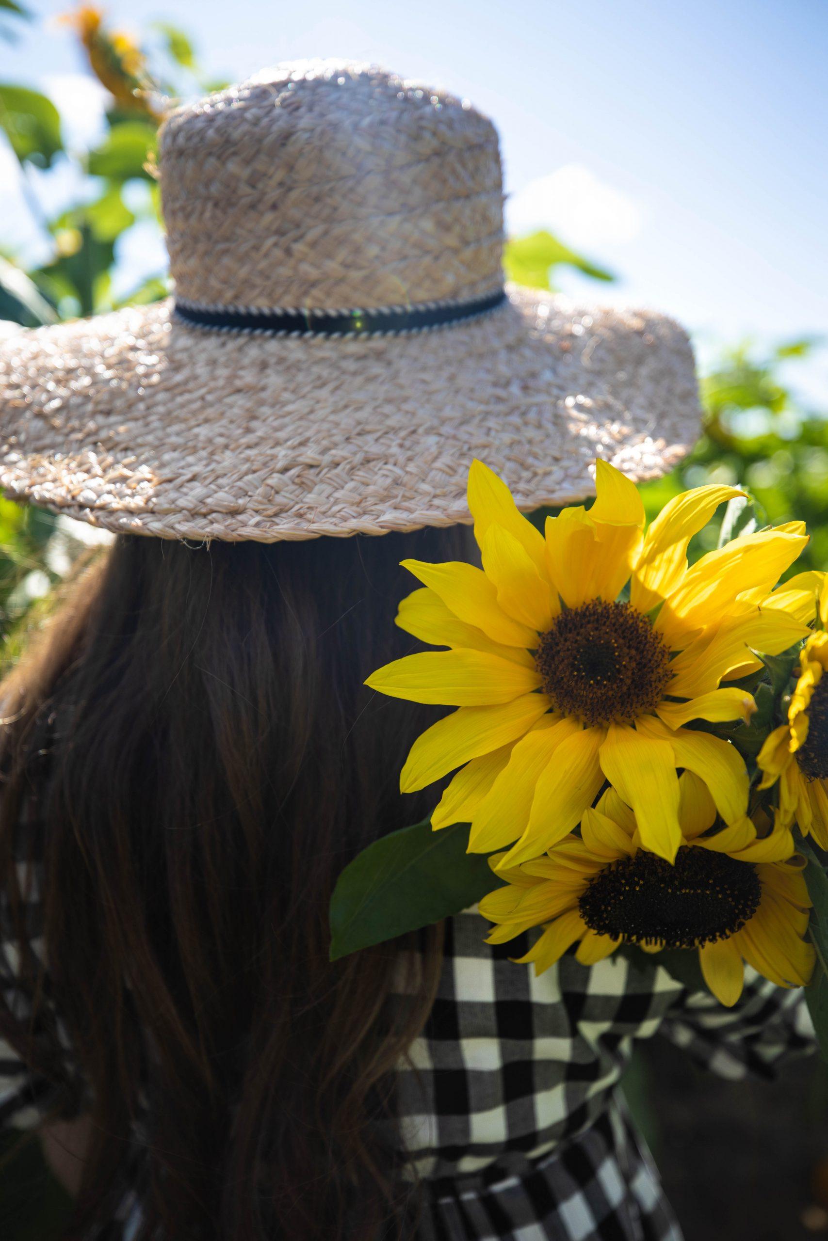 Picking Sunflowers in the Sunshine at DeBucks Corn Maze and Flower Farm Belleville Michigan by Annie Fairfax