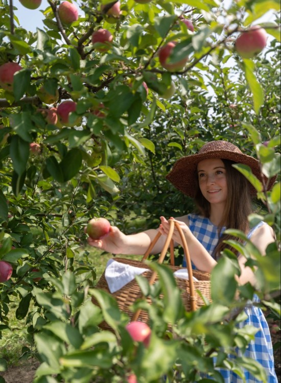 Our Apple Orchard Harvest Apple Picking in Fall in Michigan Midwest Fall Itinerary by Annie Fairfax