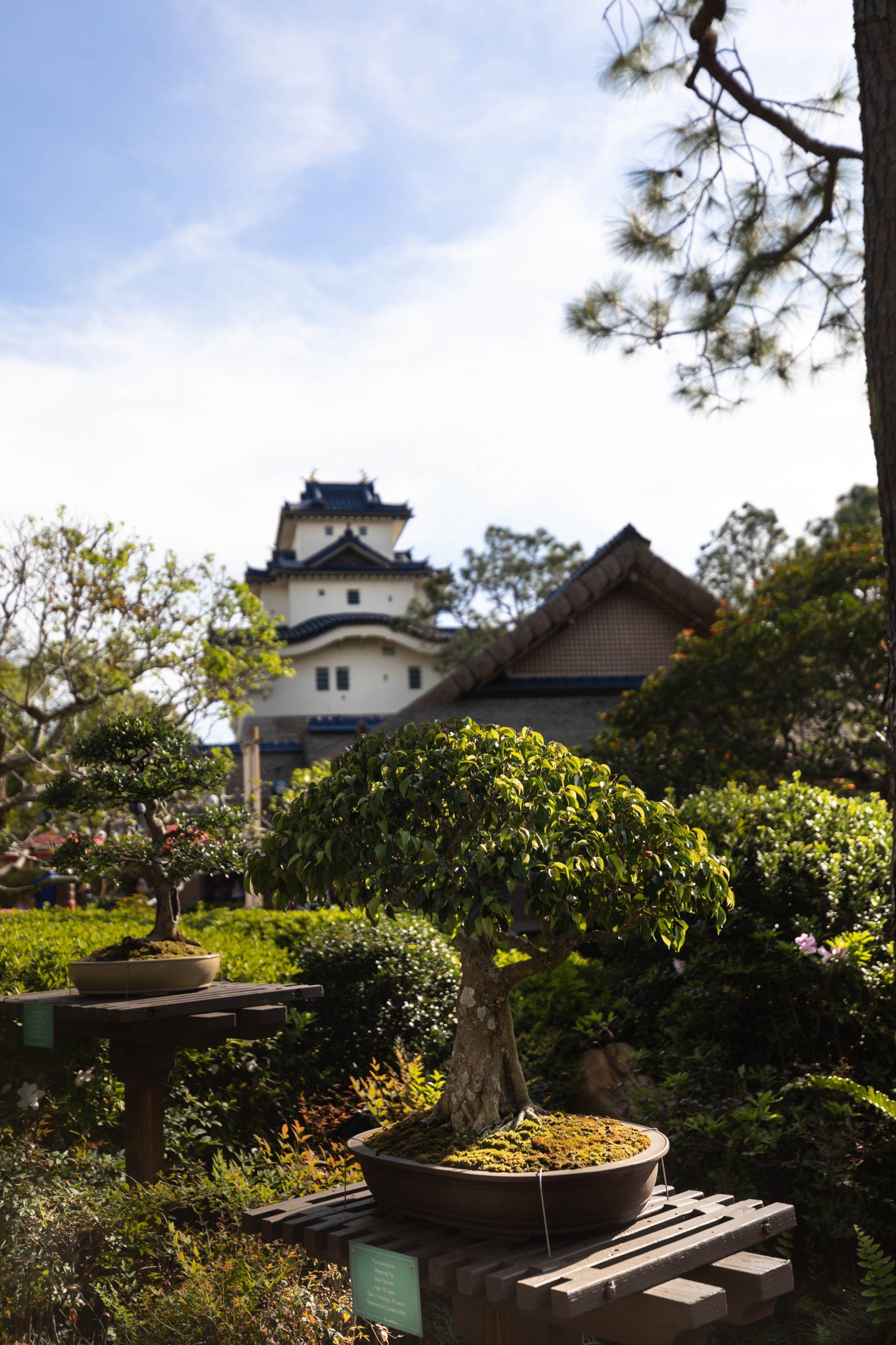 Japan Inside Epcot World Showcase Epcot International Flower & Garden Festival by Annie Fairfax