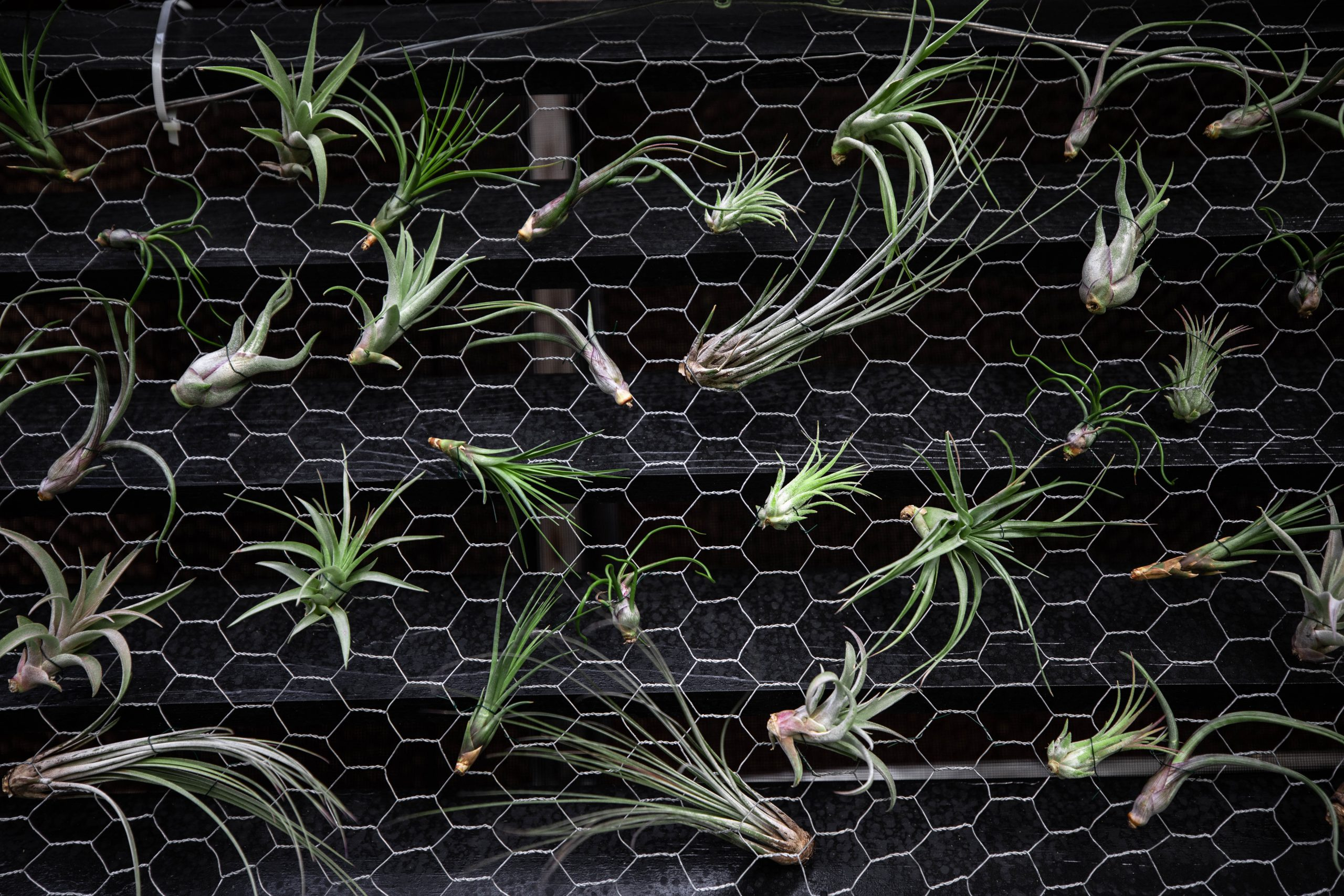 Air Plants Photographed by Luxury Travel Writer Annie Fairfax
