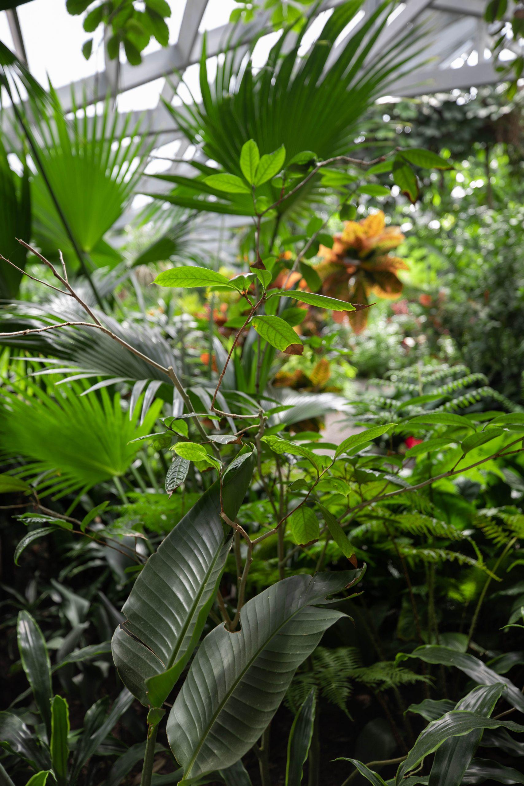 Magnolia Plantation & Gardens in Charleston South Carolina Written & Photographed by Annie Fairfax