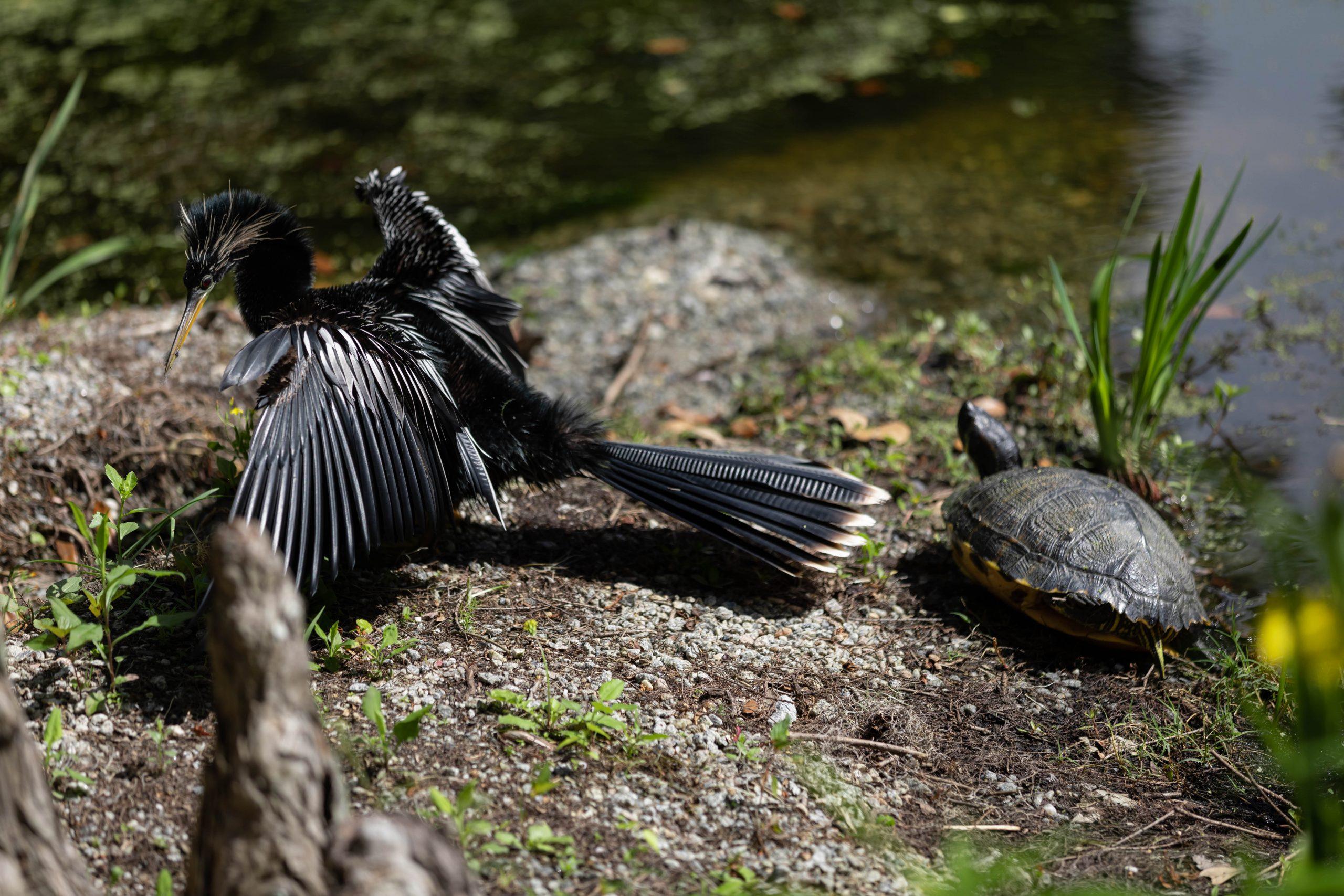 Turtles and Bird at Magnolia Plantation & Gardens in Charleston South Carolina Written & Photographed by Annie Fairfax